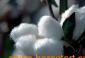 供应大豆油设备\菜籽油设备\花生油设备\油脂设备\棉籽油设备\棉油设备