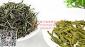 2014年新茶 特级绿茶珍品云南临沧凤庆特级好茶叶 日照绿茶