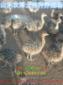 鸵鸟养殖成本预算
