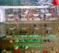 供应鸽子笼 兔子笼 狐狸笼 鹌鹑笼 鸡笼 宠物笼 养殖笼具